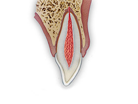 permanent-teeth_282x212px